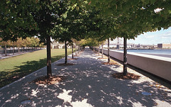 Symmetry in Roosevelt Island (vpastro) Tags: newyork nikonfe nikkor24mmf28ai film agfavista400 symmetry rooseveltisland contrast shadows trees outdoors