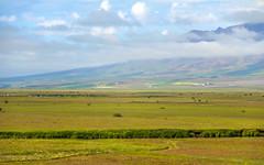 Meadow and fields in Varmahlíð in Skagafjörður, North of Iceland (thorrisig) Tags: 06072016 blönduhlíð varmahlíð sveit tún víátta iceland ísland island thorrisig thorfinnursigurgeirsson thorri þorrisig thorfinnur þorfinnur þorri þorfinnursigurgeirsson sigurgeirsson sigurgeirssonþorfinnur nature náttúra norðurland northoficeland north farm meadow fields view greatview skagafjörður skagafjordur skagafjord vastness openspace
