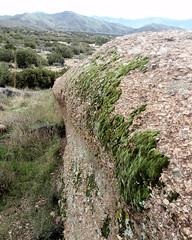 047 Gathering Moss (saschmitz_earthlink_net) Tags: 2017 california orienteering vasquezrocks aguadulce losangelescounty laoc losangelesorienteeringclub