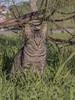 GATO (BLAMANTI) Tags: gatos felinos mascotas animales campo domestico silvestres