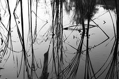 Specular reflection (Yuta Ohashi LTX) Tags: specular reflection abstract pattern water 反射 水面 模様 lines outdoor bw nikon ニコン d750 lights shadows 光 影 silhouette シルエット 白黒 モノクロ black white monochrome japanese japan