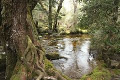Enchanted walk (Ne_Obliviscaris) Tags: enchanted walk pencil pine creek cradle mountain australia tasmania