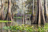 leave him in his wandering (Nola Nate) Tags: flatlake ibeauty cypress tree swamp trees reflection hiacynth spanishmoss morgancity louisiana nature landscape bayou lagoon atchafalaya