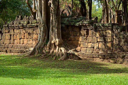 Tree growing into the wall of the temple ruin at Prasat Mueang Singh historical park in Kanchanaburi, Thailand