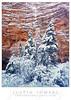 Frosty Cloak (Justin Lowery) Tags: largeformat film analog 4x5 provia fujifilm fuji fujichrome transparency slidefilm intrepidcamera intrepid snow winter zion zionnationalpark nationalpark fujinon 180mm