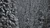 Winter forest (Pianocchio) Tags: retezat rumänien karpaten carpathian mountain romania national park gentiana bucura peleaga snow winter mountainering mountaineering