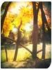 River (aabiddle) Tags: fall trees yellow art fun sun river arizonia