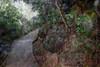 山中遊034 (kingston Tam) Tags: moss grass path hillside hiking field bigtree oddtree garden nature fujifilmxt1