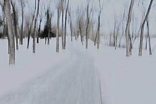 ICM Trees 095Mod