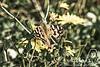 Macro, detalles, prueba (Gaditana93) Tags: flora macro mariposa canon canon400d gaditana93 maríadelcarmendelgadomaline prueba