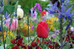 Blaze of color (KPPG) Tags: blazeofcolor blumen flowers monet´sgarden france garten garden colorful frankreich samsungnx nx3000