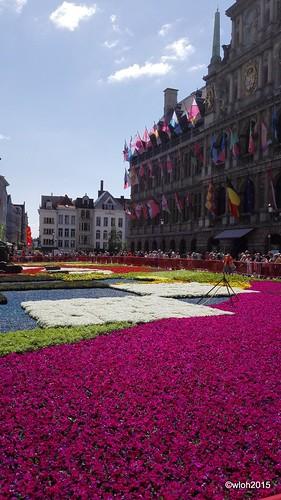 Flowercarpet Antwerp