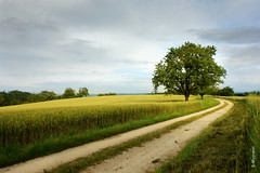 summer evening (welenna) Tags: summer switzerland evening abend strasse feld baum