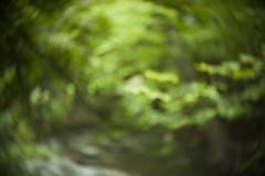 Bokeh Swirls (Avintiquin) Tags: digital forest lens lumix utah bokeh f14 cctv panasonic adapter swirls slc bleh 25mm 2015 m43 gf2 avintiquin