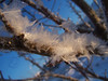 Study in Hoarfrost - Tree 4 (J Swanstrom (Never enough time...)) Tags: winter snow cold texture ice kodak hoarfrost south falls sd dakota dx7590 sioux leavesofice jswanstromphotography
