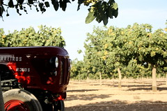 IMG_0383 (ACATCT) Tags: old españa tractor spain traktor agosto toledo antiguo massey pistacho tembleque barreiros 2015 bustards perdices liebres avutardas ff30ds r350s