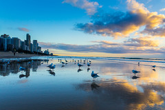 Seagulls on the beach (Masa_N) Tags: morning seagulls beach winter seashore seaside australia birds buildings surfersparadice reflection sand goldcoast sea surfersparadise queensland オーストラリア au