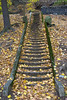 Fall (Tom Jolly) Tags: stairway palisadespark newjersey nj autumn leaves