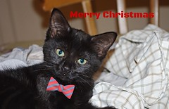 Merry Christmas (Blue sky and countryside) Tags: newkitten fun lively mischievous derbyshire england pentax