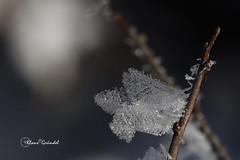 8334   Winter Ostalb (Canonklick) Tags: canon 6d macro 100mm winter eis ostalb