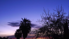 sUNDAY bLUES (wNG555) Tags: 2017 arizona phoenix dawn sunrise olympusfzuikoautos38mmf18 shadows silhouettes tree palm sky clouds