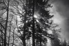 the fight (Toni_V) Tags: m2402637 rangefinder digitalrangefinder messsucher leica leicam mp typ240 type240 28mm elmaritm elmaritm12828asph hiking wanderung randonnée escursione vitznaurigikulmarthgoldau schwyz blackwhite schwarzweiss bw monochrome sep2 silverefexpro2 niksoftware sun fog mist nebel trees wald bäume alps alpen landscape winter ©toniv 2016 161227 gegenlicht backlight