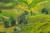 _J5K1659.0814.Sa pả.Sapa.Lào Cai (hoanglongphoto) Tags: asia asian vietnam northvietnam northwestvietnam landscape scenery vietnamlandscape vietnamscenery vietnamscene terraces terracedfields terracedfieldsinvietnam terracedfieldsinsapa harvest dale hillside outdoor canon canoneos1dsmarkiii trees bamboo stone stones tâybắc làocai sapa sapả phongcảnh ruộngbậcthang ruộngbậcthangsapa thunglũng sườnđồi tảngđá bụitre lúachín mùagặt sapamùagặt sapamùalúachín canonef70200mmf28lisiiusmlens