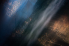 Metamorphosis #1 (gogos_yiannis) Tags: nature tree abstract icm multipleexposures