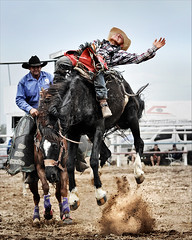 Saddle Bronc (Christine Dalton) Tags: bowen river queensland australia rodeo horse cowboy rider saddle bronc