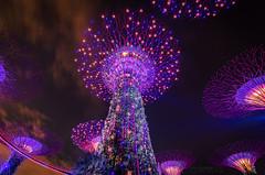 Gardens by the Bay@night (Oliver H16) Tags: singapur asien nikon d7000 wolken wasser city nachtaufnahme nightshot langzeitbelichtung night longexposure skyline chinatown downtown panorama singapurflyer marinabaysands helixbrücke gardensbythebay esplanade sunteccity singapurriver singapoure