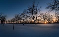 Sun of Winter (Valentin Alexandru) Tags: winter travel europe romania arges trip rural tara colors bluehour sun snow trees hope night nikon canon d810 d5 valentinalexandru tripod hdr photoshop lightroom
