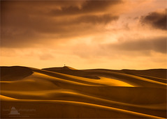 Alone, Swakopmund, Namibia (www.fourcorners.photography) Tags: softness curves solitaire africa swakopmund namibia dunes sand yellow orange alone peterboehringerphotography