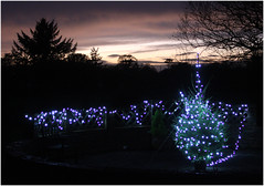 Machlud Pinged dros Nadolig (pentrepinged) Tags: nadolig christmas sunset lights