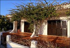 Pretty courtyard (catb -) Tags: algarve armona olhão portugal culatra climber garden courtyard house island ilha