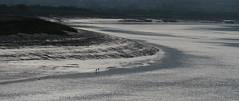 The River Parrett (jump for joy2010) Tags: uk england somerset somersetlevels pawlettstretcholt thehams coastalpath riverparrett january 2017 intothesun lowtide mudbanks birds ravens