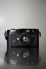 Queen - VI (scurvy_knaves) Tags: leica minnesota minneapolis msp fujifilm cameraporn leicamp xpro1 fujinonxf35mmf14r 35mmsummiluxf14preaspherical