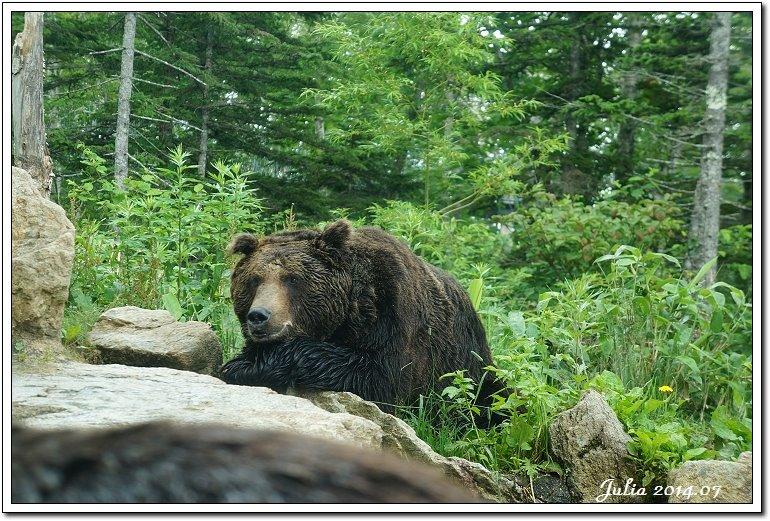 熊牧場 (28)