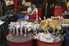 A chicken vendor at Khlong Toey market (updara) Tags: chicken thailand asia raw market bangkok meat toey khlong