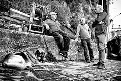 Pomeriggio a Scilla (pinomangione) Tags: pinomangione street scilla fotoamatorigioiesi biancoenero bienne monocromo cane dog