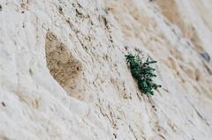 Winter Jerusalem day trip (Paul Jacobson) Tags: dayout familyouting jerusalem israel daytrip winter ירושלים חנוכה hanukkah old city oldcity westernwall