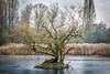 Island Tree (Nicholas E Jones) Tags: january 2017 landscape winter nicholasejones photography flowersplants coventry brandonmarsh walk 07903735385 httpwwwnicholasejonescom nikon nicholasejonesicloudcom
