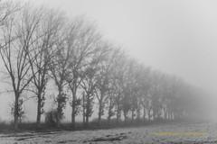 Mist II (Capturedbyhunter) Tags: fernando caçador marques fajarda salvaterra de magos monochrome monocromático black white preto e branco mist nevoeiro pentax k1 revuenon 112 12 f12 55mm 55 mc outdoor manual focus focagem foco