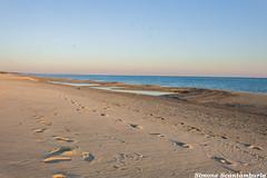 mare (§imo) Tags: sea mare tramonto spiaggia inverno europa italia calabria catanzaro sunset winter beach europe italy simone scantamburlo gabbiani seagulls relax solitudine felicità loneliness happy canon 70d 1855 orme