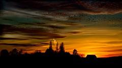 Judgement Day (Marie.L.Manzor) Tags: sunset sky clouds birds nature landscape silhouette colors light nikon d610 marielmanzor trees forest 1000favs 1000favorites