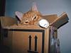 100_1230 (MykeOwns) Tags: tabbycat tabby cat cats boxes catinabox catsinboxes
