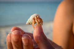 H-A-L-P! (Rebel Yell 82nd) Tags: lankanfinolhu atoll maldive maldives paradiseisland resort amazingplaces nikon d7000 sea ocean reef barrieracorallina sabbia spiaggia shore beach sand white bianca sky cielo hermit paguro crab shell