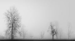 Niemand sieht Dich schreien... (zenofar) Tags: nikon d810 sigma 35mm art panorama baum tree fog winter germany deutschland düsseldorf urdenbach trist