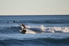 Surfin' Bird (ssgkeiththomas) Tags: ocean street beach photography hawaii surf break oahu wave surfing