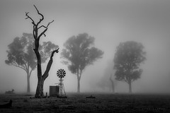 Winter Mornings (Mark McLeod 80) Tags: trees mist windmill fog rural farm australia sa southaustralia coonawarra penola 2015 markmcleod sigma24105mmf4dgosart