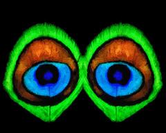 Eyes Augen oculus  ojo   il  oog  (Marco Braun) Tags: art ojo eyes augen oculus oog il